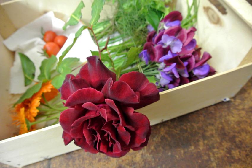 07 14 13 wimblington horticultural show17