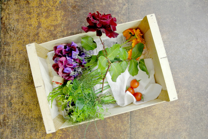 07 14 13 wimblington horticultural show18