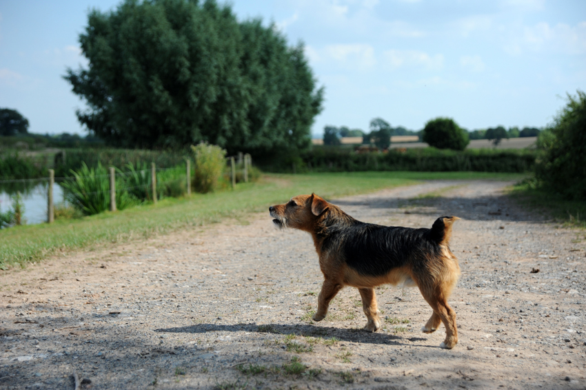 2014 07 24 chase laddins farm 25