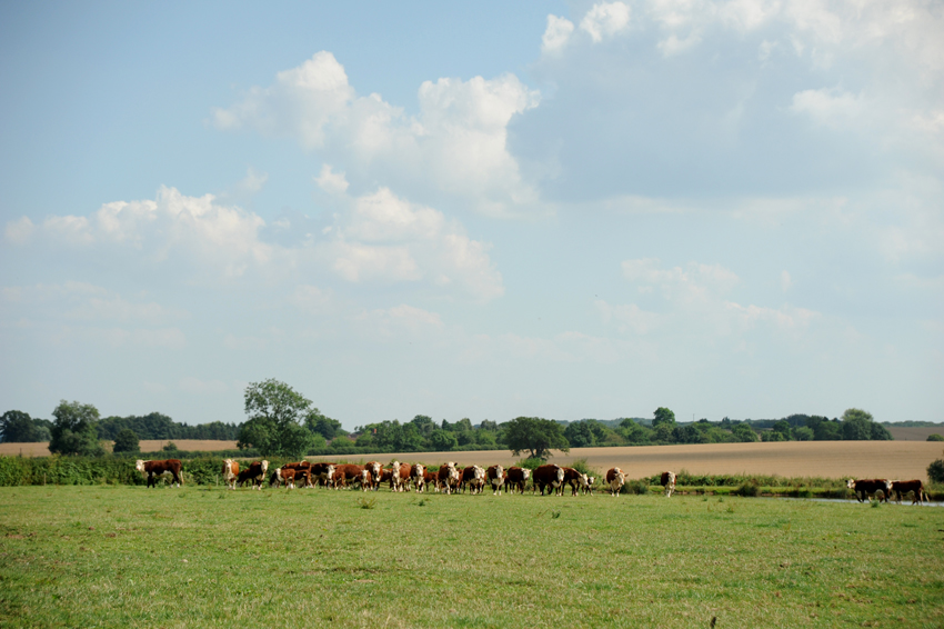 2014 07 24 chase laddins farm 41
