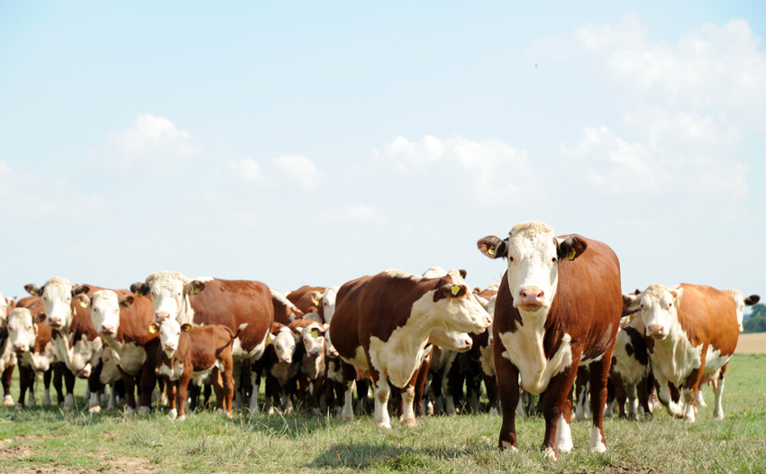 2014 07 24 chase laddins farm 45
