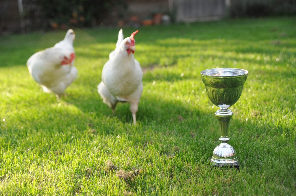 09 03 13 chickens trophy egg cup 01